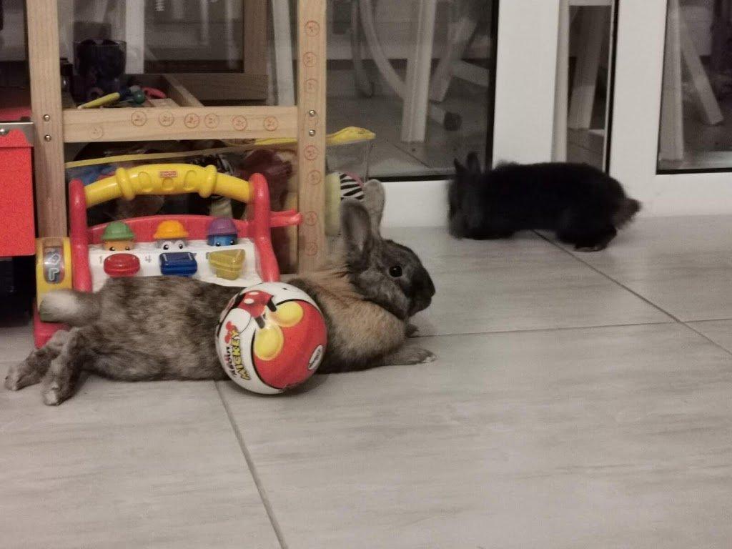 δύο κουνέλια